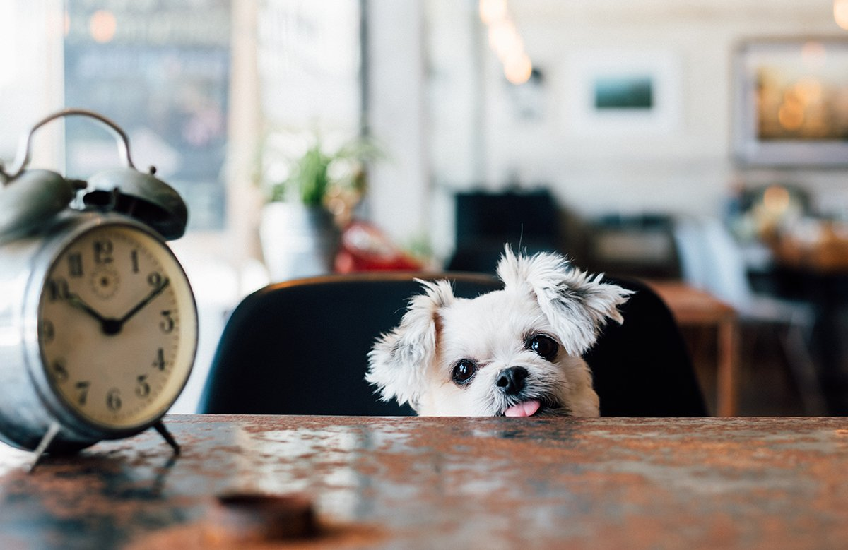 vericlock-time-tracking-img-careers-dog-clock2